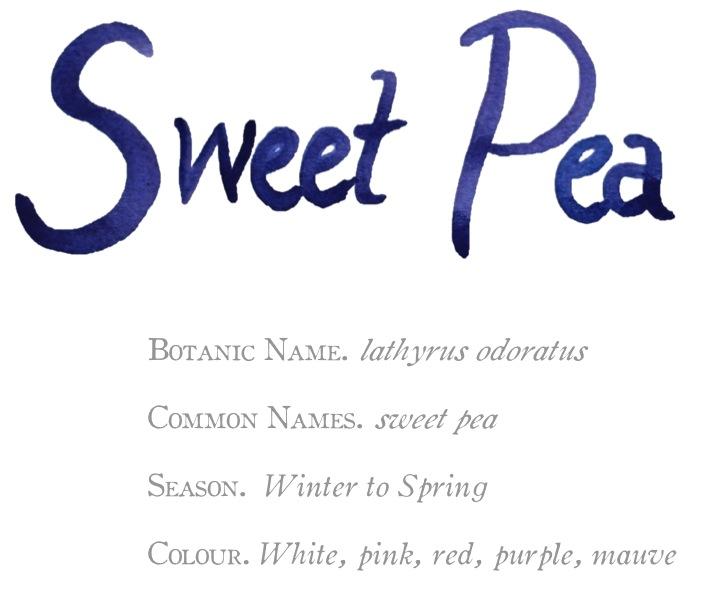 sweet pea