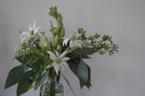 Flannel flower eucalyptus