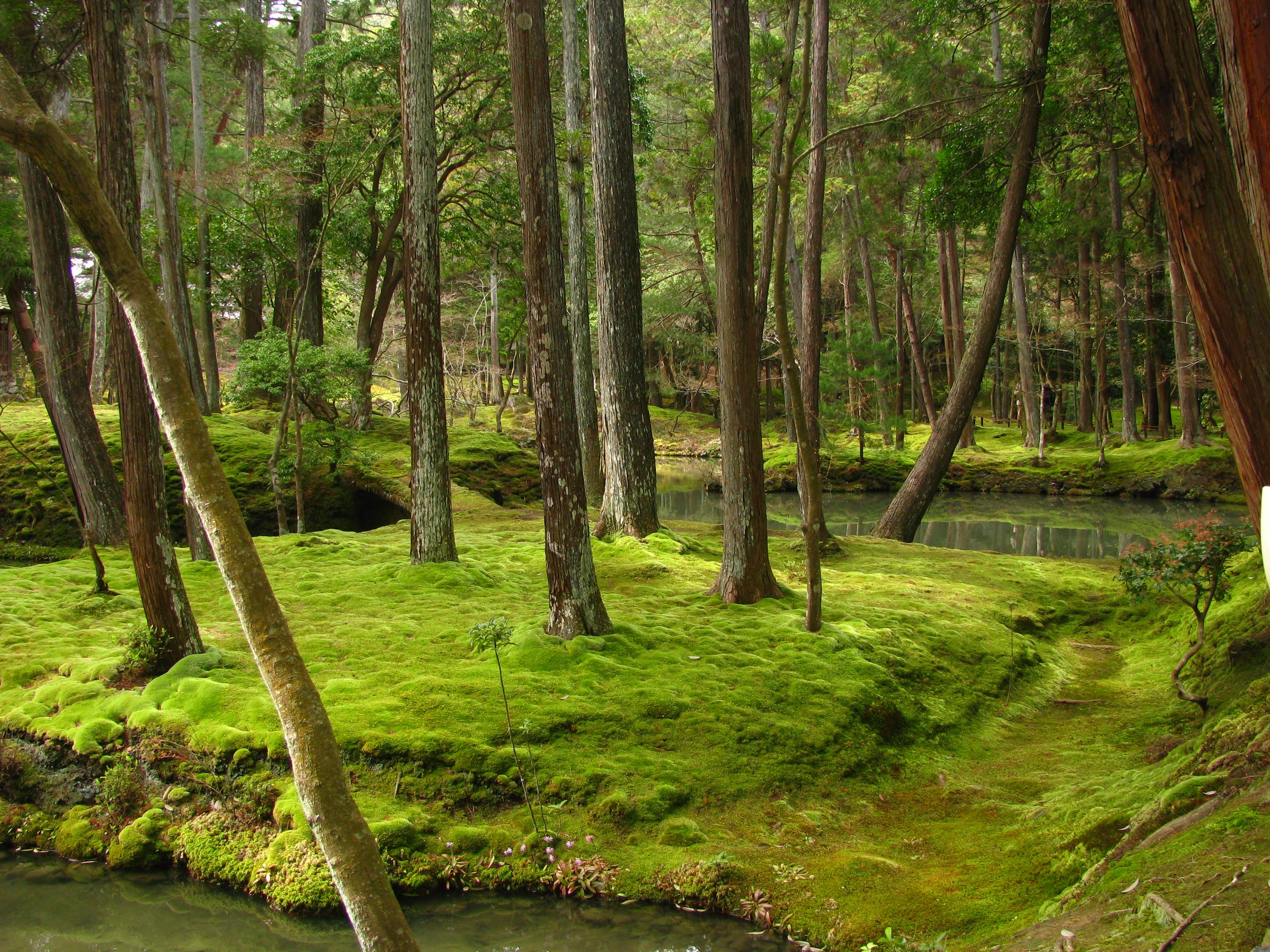 saiho-ji kyoto moss