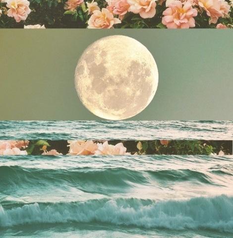 Ocean moon flowers