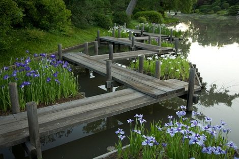 Irises and zigzag bridge