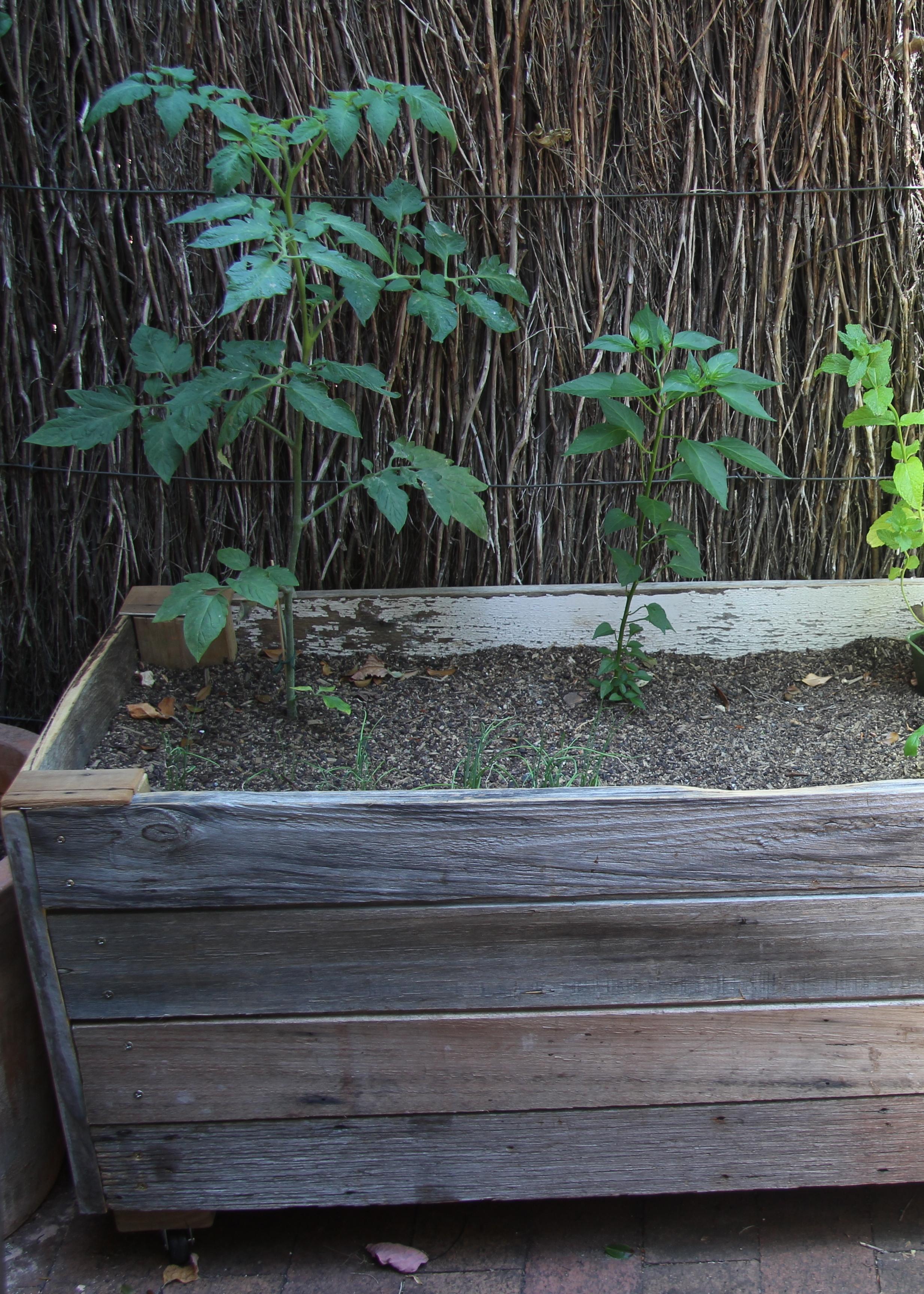 Wooden veggie planter