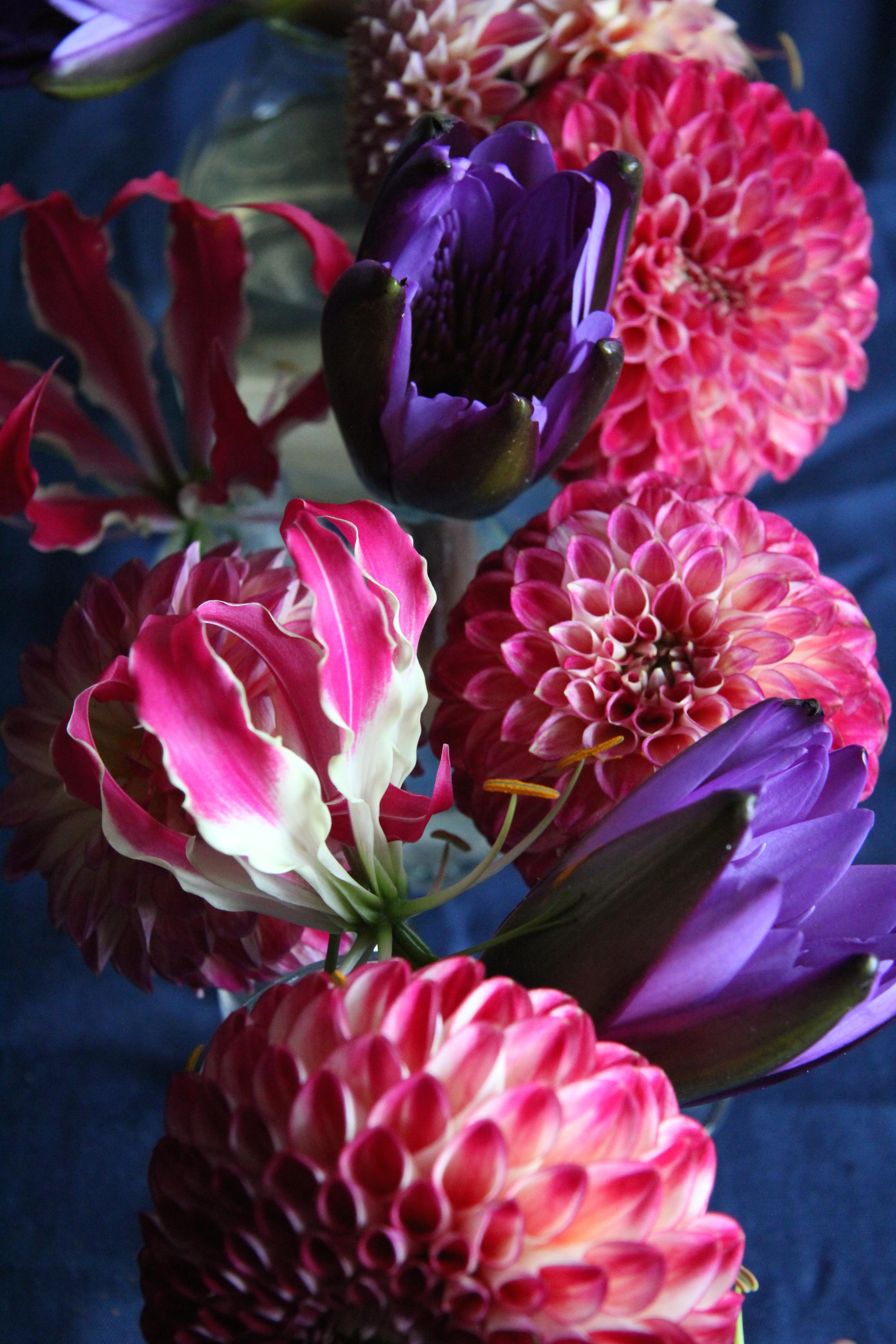 gloriosa dahlia water lily