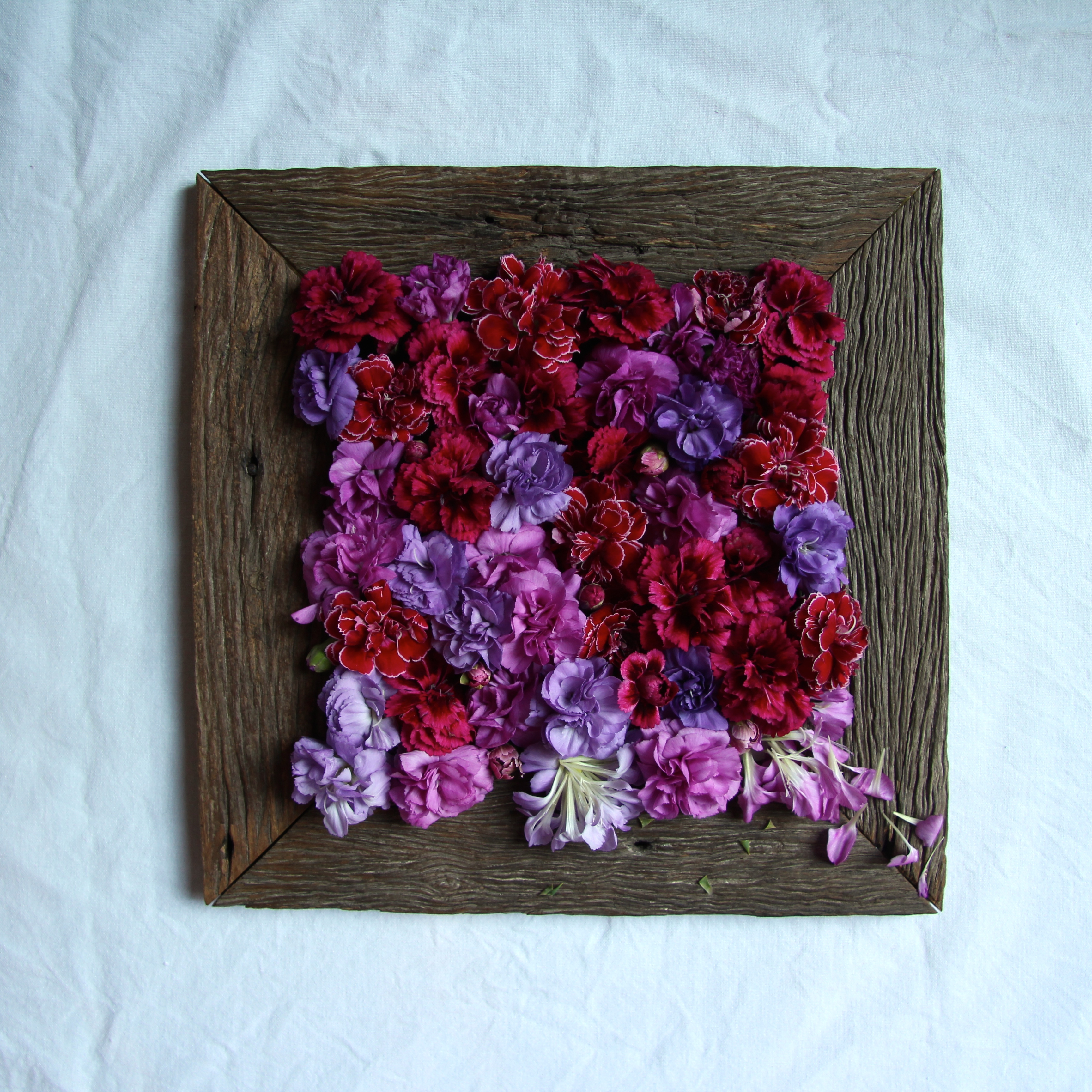 Ombre carnations